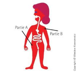 Figure 2 : Le système digestif de madame Leplat ne peut être un tube comme le nôtre car elle serait divisée en deux parties.