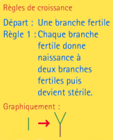 l-systeme_img18