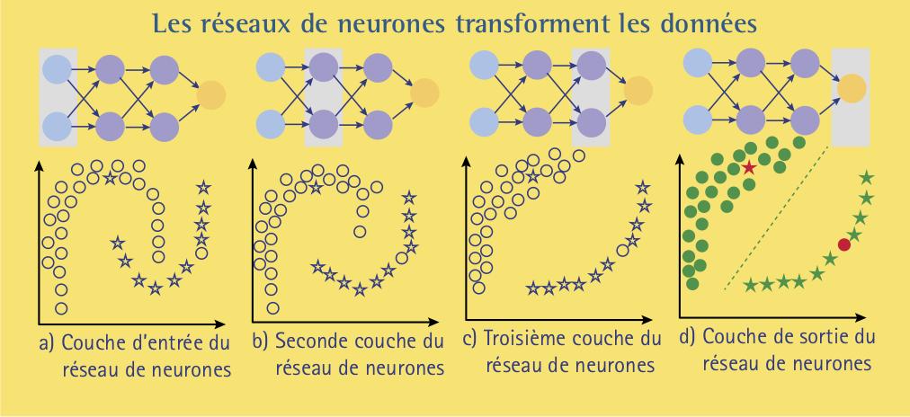 neurones-6