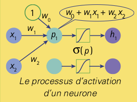 neurones-8
